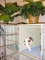 Cat open cage - Cat care in Bellevue, WA