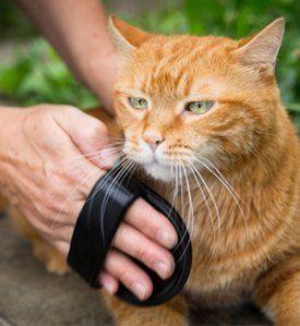 Cat Grooming Little Rock AR