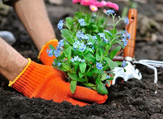 Mani che piantano una pianta nel terreno