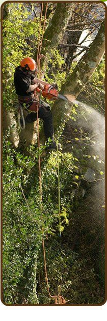 Tree surgeons - Worcester, Worcestershire - TRW Professional Tree Surgery - Tree Cutter