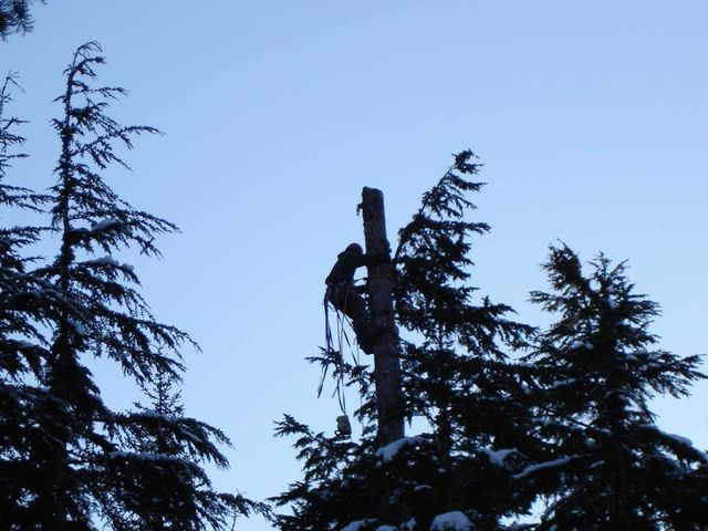Our residential tree service team member in Anchorage