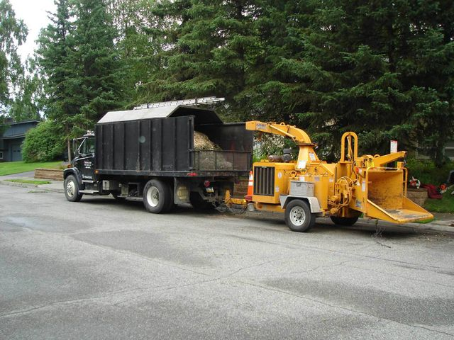 Commercial tree service team at work in Anchorage