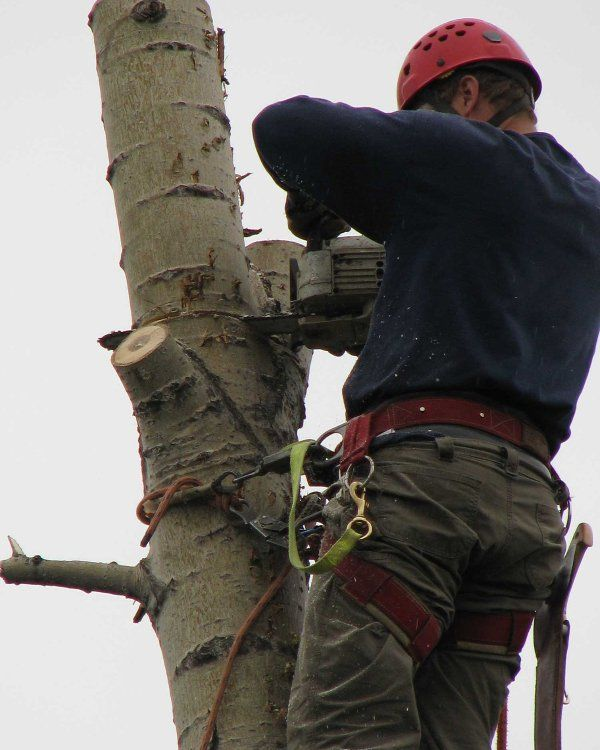 Our professional arbor crew member in Anchorage