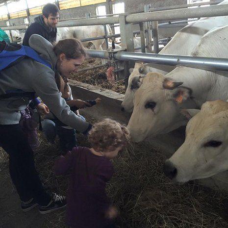 Bambino dà dell'erba alle mucche a Torino