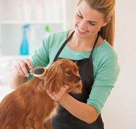 Dog grooming in wolverhampton by mucky paws dog grooming for A touch of class pet salon