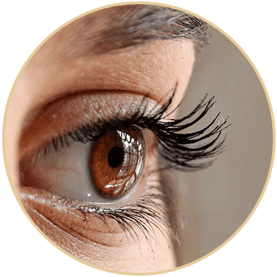 Eyelashes and eyebrows from The Art of Beauty
