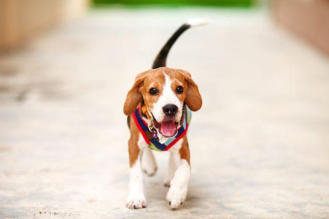 Dog at veterinary hospital