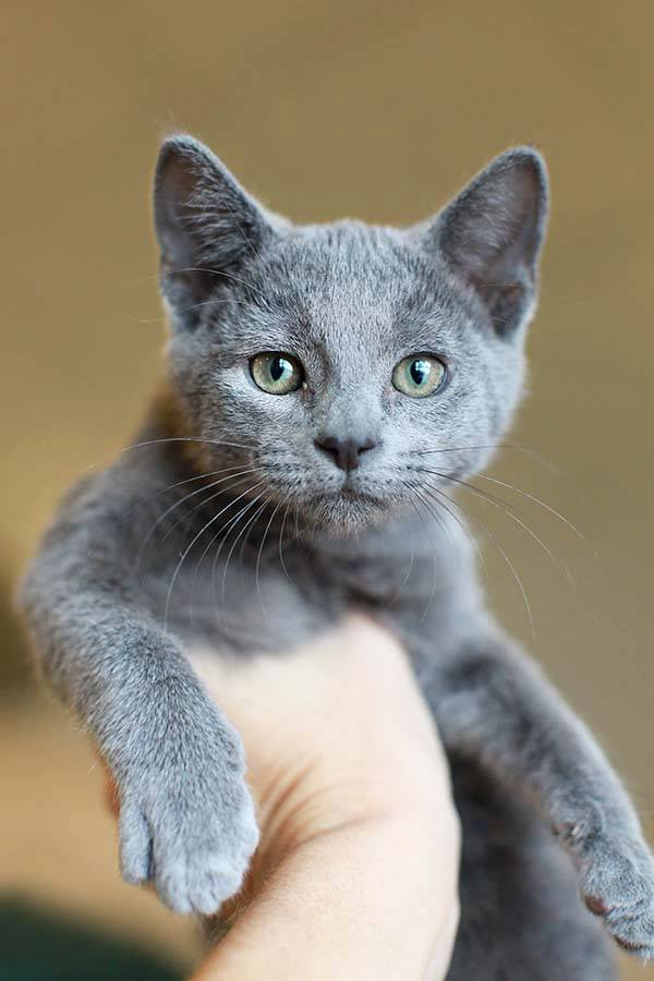 Grey colored cat