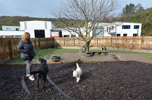 Marjon Kennel employee playing with dogs