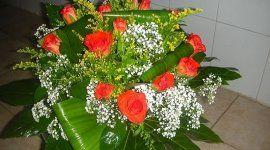 rose e piante