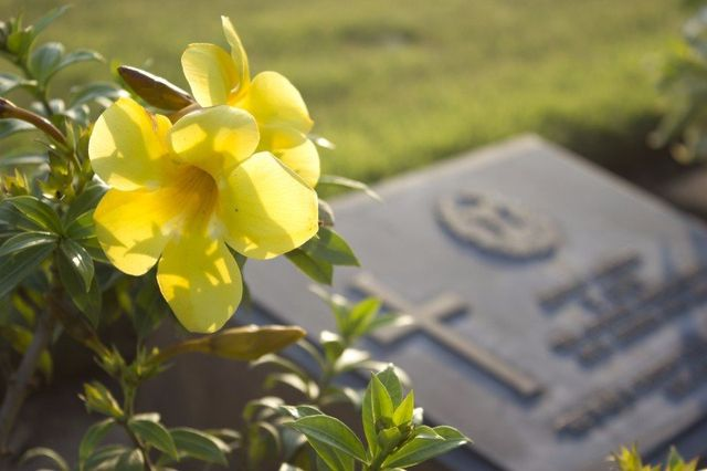 un fiore giallo è accanto una lapide in marmo