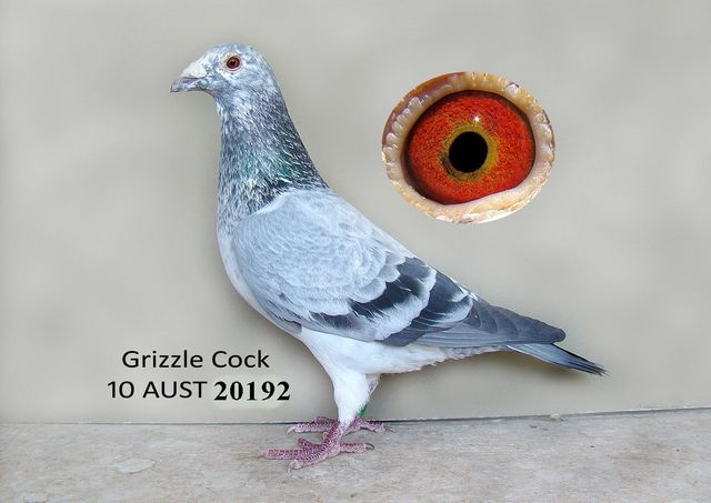 Welcome to www phoenixloftsaustralia com
