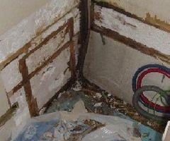 Damp repairs