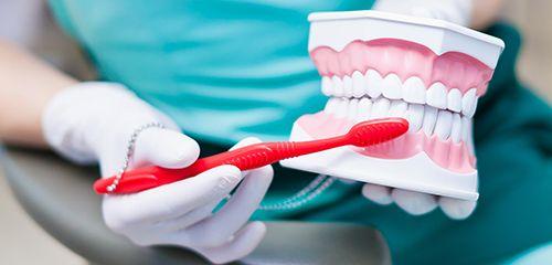 Dentist brushing dummy teeth for restoration dentistry in Pekin.
