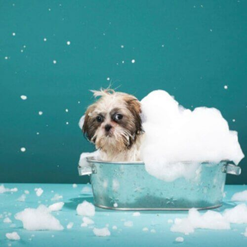 Dog grooming services aurora co dugans dog house add on services solutioingenieria Choice Image