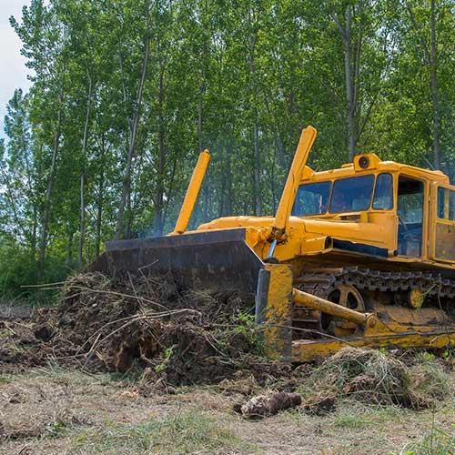 Land Clearing   Nashville, TN   Kaily's Tree Service