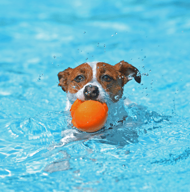 dog holding a ball with her mouth in a pool