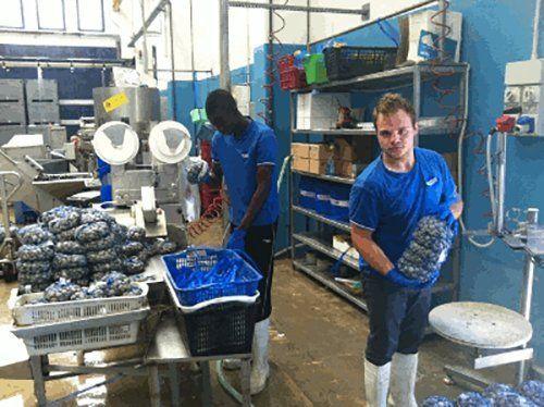 operai durante depurazione cozze