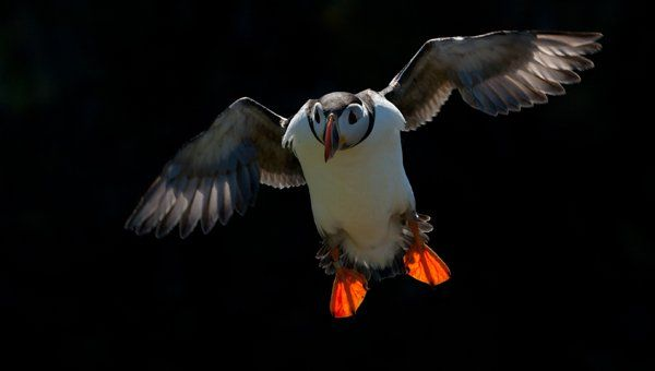 Puffin Sunset Photography Tour