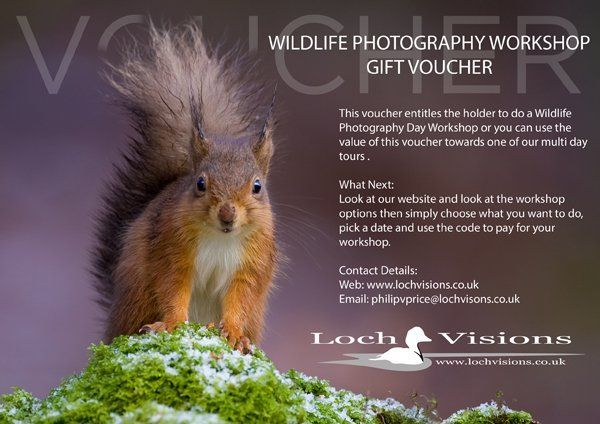 wildlife photography workshop voucher