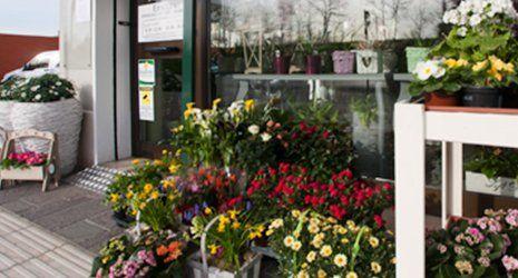 Ampio assortimento di piante e fiori freschi per eventi e cerimonie di ogni tipo