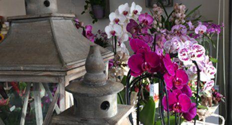 Composizioni di orchidee di diverso colore