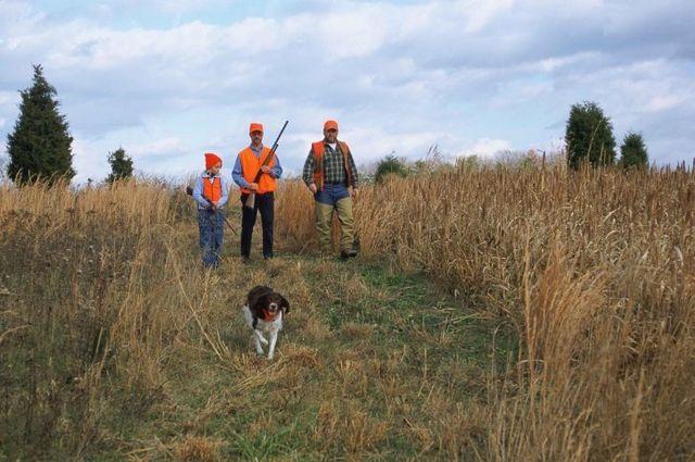 Pheasant Hunt Flushing Shooting