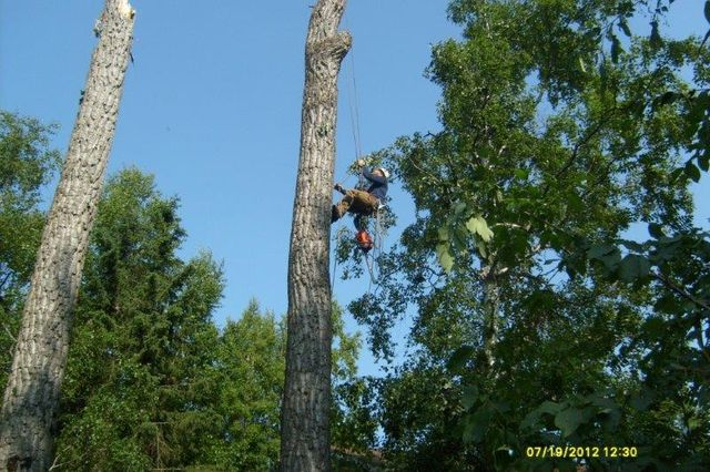 Man in a tree provides land clearing and excavating services in Anchorage, AK