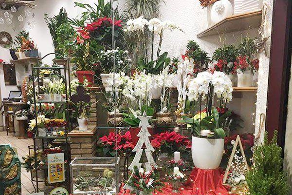 Una vetrina con dei vasi con fiori e piante ornamentali