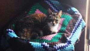 A cat lying on a multi-coloured knitted blanket