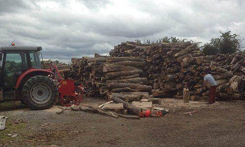 logs seasoning for firewood