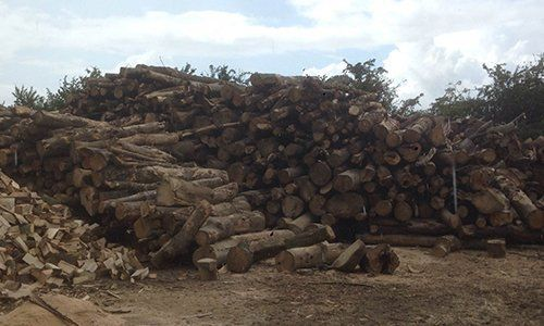 piles of logs
