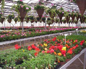 Bedding plants - Cardiff, South Wales - J Deen & Son and The Dutch Garden Centre - Flower plants
