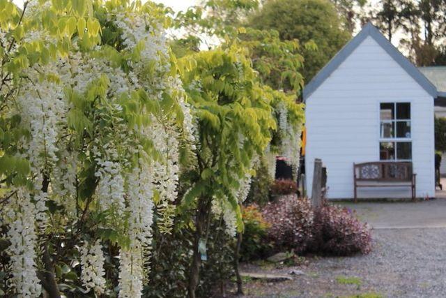 Lawns and garden preparation services