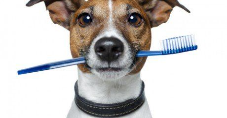 How To Brush Your Pet S Teeth Houston Tx Lakeside