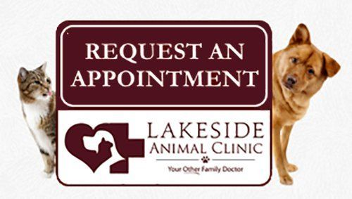 request an appointment at Lakeside Animal Clinic