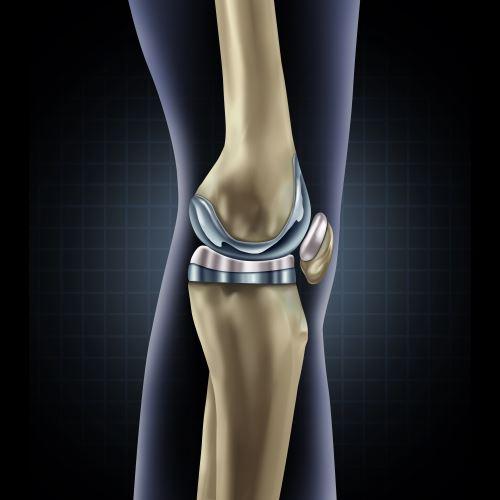 illustrazione di ossa gamba