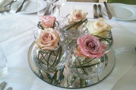 Roses in small pots