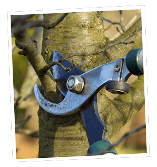 Tree pruning - Epsom - Roots & Shoots - Branch cutting