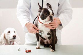 Veterinary practice - Wetherby, North Yorkshire - Wagtails Veterinary Centre - Dog