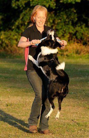 Canine beautician