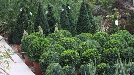 tree hedging