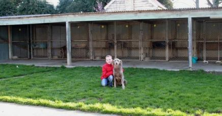 The largest and best dog boarding facilities in Invercargill and Southland