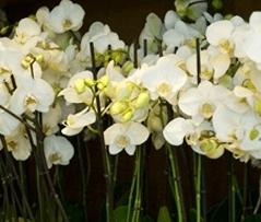allestimenti fiori