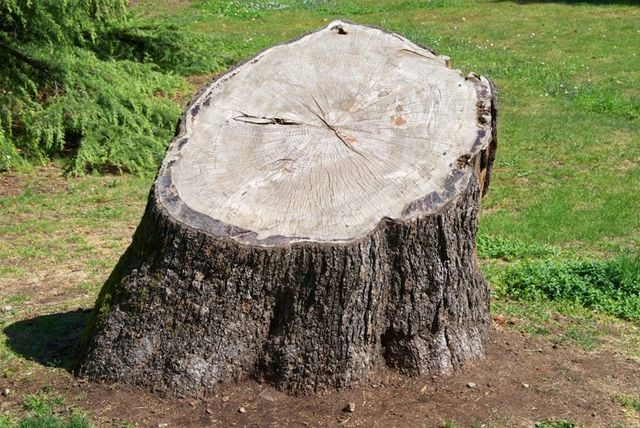 Alpine Tree Specialists Tree Stump Removal