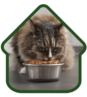 Special diets for cat