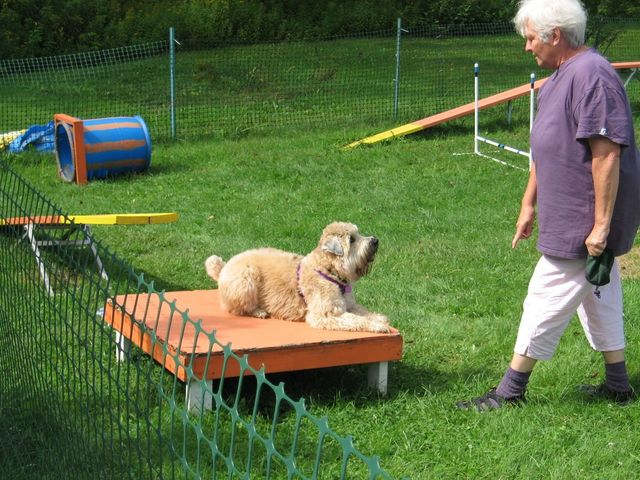 Dog Agility Training Classes in Lyndonville, VT