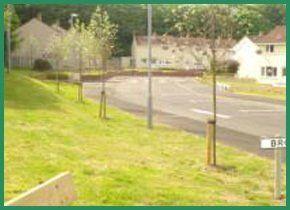 Grass verge alongside a curving road