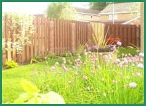 Timber fencing around a garden