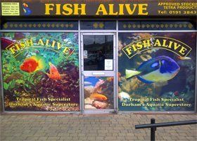 Maintaining aquariums - Durham - Fish Alive - Aquarium fish